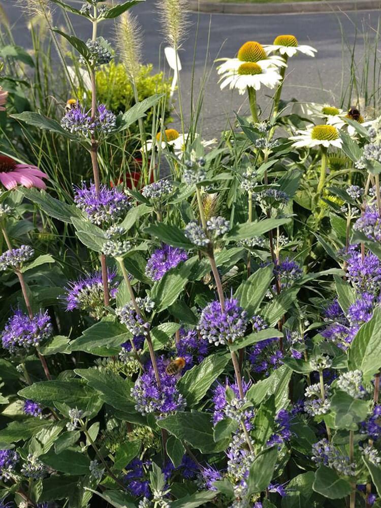 Gartenpflanzen1