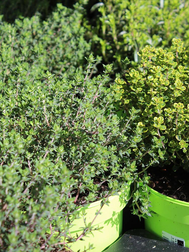 Gartenpflanzen3