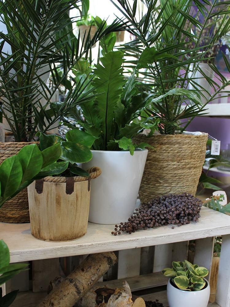 Gartenpflanzen6